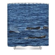 Long-finned Pilot Whales Shower Curtain