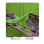 Long Grasshopper Shower Curtain