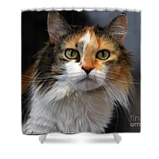 Long Haired Calico Cat Shower Curtain