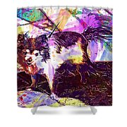 Long Haired Chihuahua Dog Pet  Shower Curtain