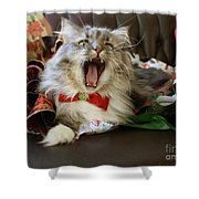 Long Haired Grey And White A Cat Yawns Amid Christmas Wrapping Paper Shower Curtain