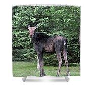 Long Legged Moose Shower Curtain