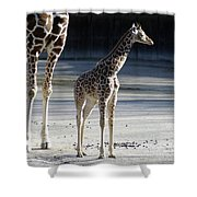 Long Legs - Giraffe Shower Curtain