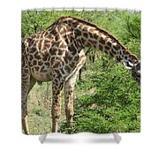 Long Neck Shower Curtain