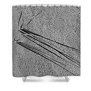 Long Shadows - 365-326 Shower Curtain