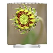 Long Stemmed Beauty Shower Curtain