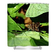 Long Tail Skipper Butterfly 1 Shower Curtain