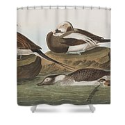 Long Tailed Duck Shower Curtain