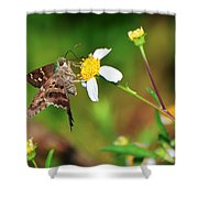 Long-tailed Skipper Butterfly Shower Curtain