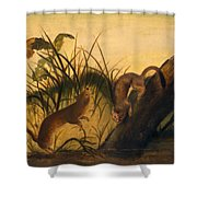 Long - Tailed Weasel Shower Curtain