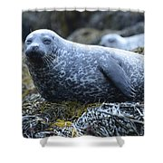 Long Whiskers On A Harbor Seal Shower Curtain
