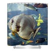 Longfin Batfish Shower Curtain