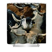 Longhorn Cattle Are Packed Shower Curtain