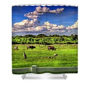 Longhorns At The Ranch Shower Curtain