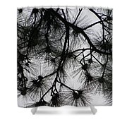 Longleaf Lace Shower Curtain