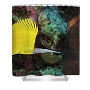 Longnose Butterflyfish Shower Curtain by Steve Rosenberg - Printscapes
