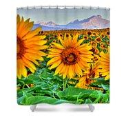 Longs Sunflowers Shower Curtain