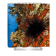 Longspined Sea Urchin Shower Curtain