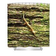 Longtailed Salamander Shower Curtain