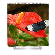 Longwing Shower Curtain