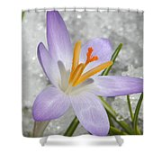 Look To The Sun Shower Curtain