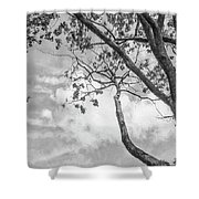Look Up Into The Sky Shower Curtain