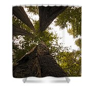 Look Up Way Up Shower Curtain