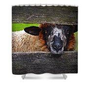 Lookin At Ewe Shower Curtain
