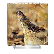 Looking A Little Cuckoo Shower Curtain