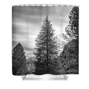 Looking For The Sky Into The Woods Shower Curtain