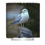 Looking Back  Shower Curtain by Cindy Lark Hartman