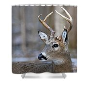 Looking Back Whitetail Deer Shower Curtain