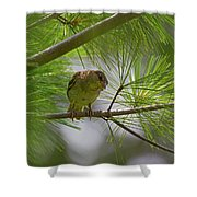 Looking Down - Common Sparrow - Passer Domesticus Shower Curtain