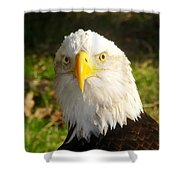 Looking Eagle Shower Curtain