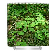 Looking For A Four-leaf Clover Shower Curtain