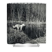 Looking For Beaver Shower Curtain
