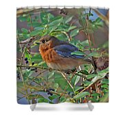Looking For Berries Shower Curtain