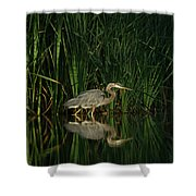 Looking For Breakfast Shower Curtain