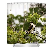 Looking For Fish Shower Curtain