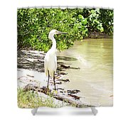 Looking For Lunch Gp Shower Curtain