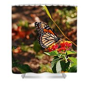 Looking For Nectar Shower Curtain