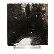 Looking Through The Hollow Trunk Of An Ancient Fallen Sequoia In Kings Canyon California Shower Curtain