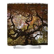 Looking Thru A Japanese Maple Shower Curtain