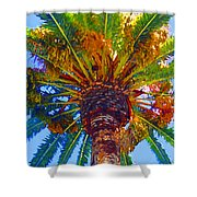 Looking Up At Palm Tree  Shower Curtain