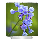 Looking Up At Virginia Bluebells  Shower Curtain