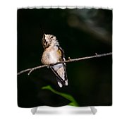 Looking Up - Hummingbird Shower Curtain