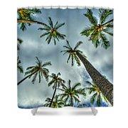 Looking Up The Hawaiian Palm Tree Hawaii Collection Art Shower Curtain