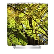 Looking Up To A Beautiful Sunglowing Fern In A Tropical Forest Shower Curtain