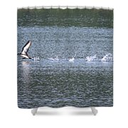 Loon Ascending... Shower Curtain