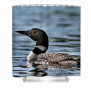 Loon In Blue Waters Shower Curtain